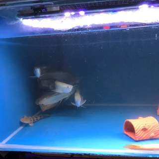 4ft fish tank with fishes