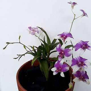 SHARING/GARDENING - Do I Use Special Orchid Fertilizer ?