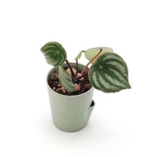 The Simple Plant Pot