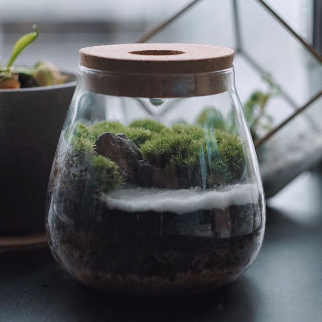 Moss Terrarium With Led Light Home Furniture Gardening On