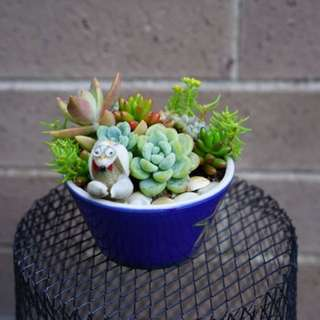 Succulent arrangement in a 10 cm pot