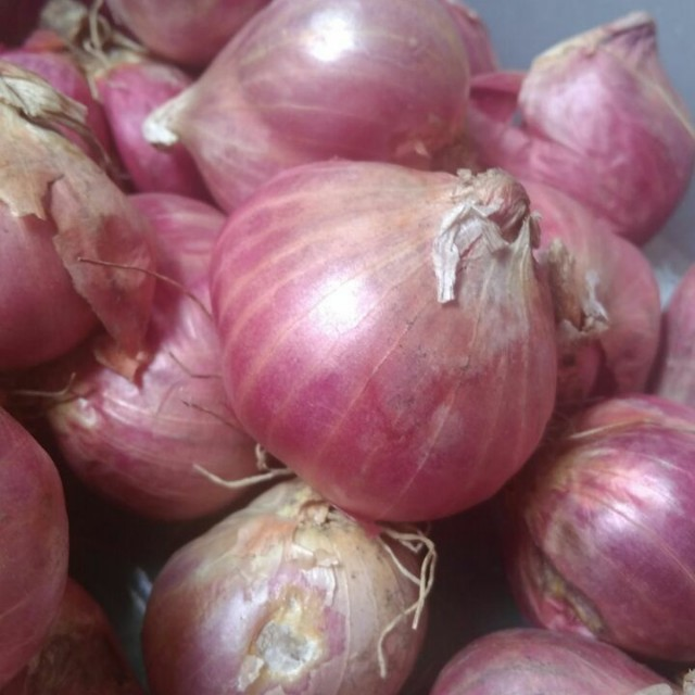 bawang merah bima