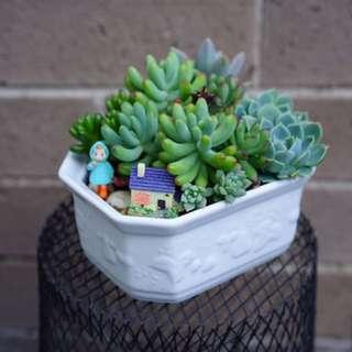 Succulent arrangement in a 14x10 cm pot
