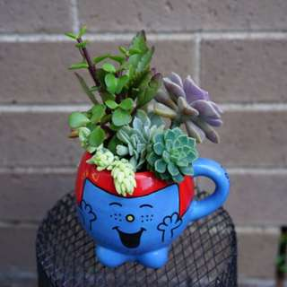 Succulent arrangement in a 10cm cup