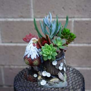 Succulent arrangement in a rooster pot
