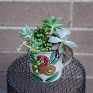 Succulent arrangement in a 8cm cup