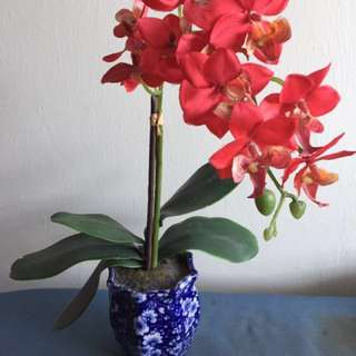 Red orchid with antic vase