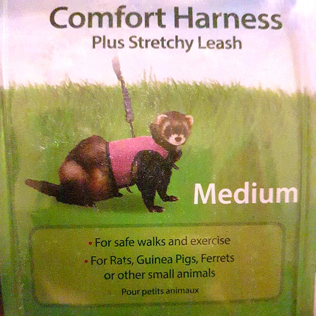 Comfort Harness + Stretchy Leash!