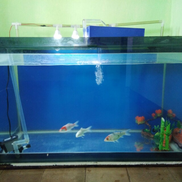 Jual Aquarium Cepat Property Others On Carousell