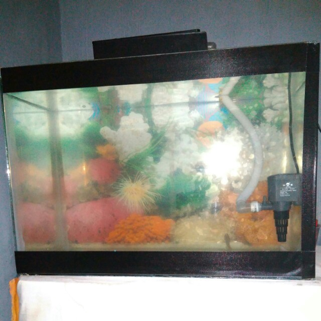 Jual Aquarium Dan Anak Ikan Lohan Pet Supplies Food On