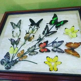 Square frame Butterfly arts collection