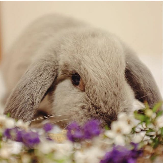 Cutest wittle bunny
