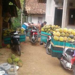Jual buah durian per rut isi 100 buah besar kecil campur