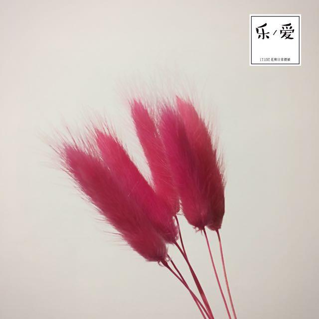 乾燥花材-桃紅色兔尾草(6支1束)