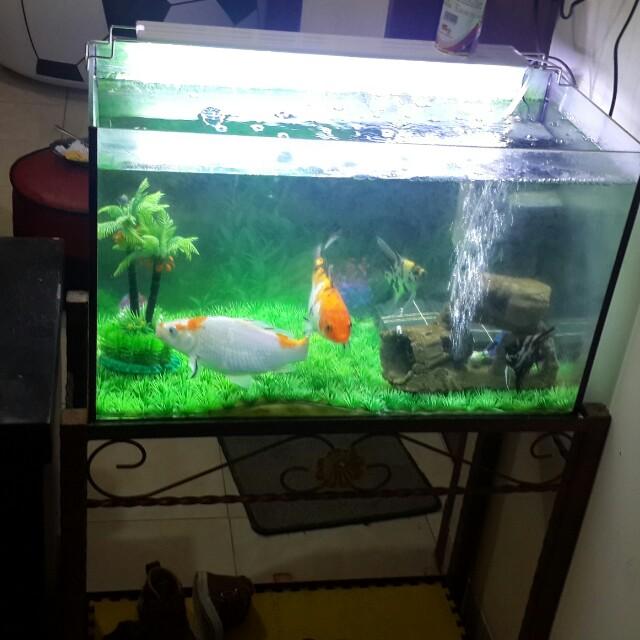Aquarium Dan Ikan Hias Home Furniture On Carousell