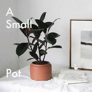 The Art of Growing a Plant