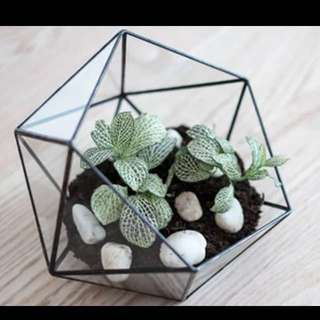 [Pre-order] 🍁Geometric Terrarium Glass🌵/ 🔮Geometric Home Decor🏠