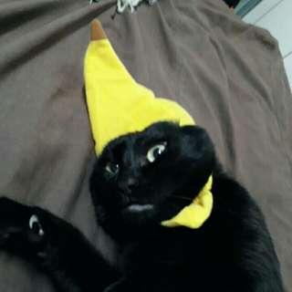 貓咪頭套 香蕉