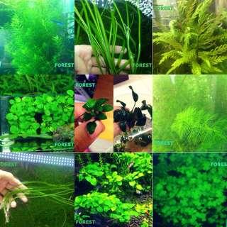 Aquatic Plant: Stock Updates