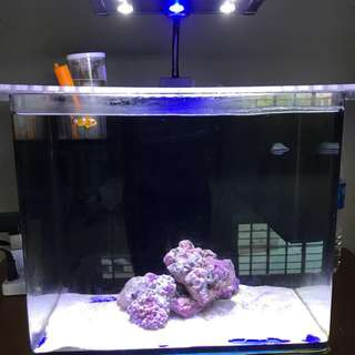 marine aquarium with free items