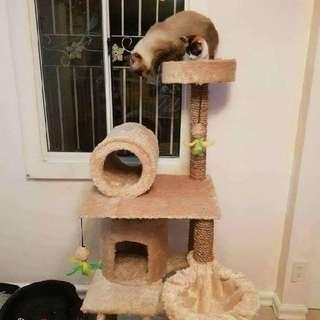 Cat Condo😍