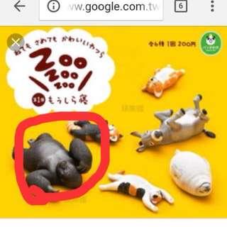 休眠動物園 猩猩
