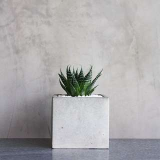 Cement pot and plant