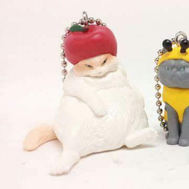 帽子貓 蘋果帽貓 價可小議