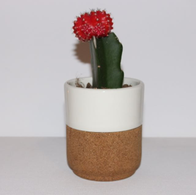 Set of 2 Ceramic & Cork Planters