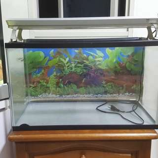 60cm X 30cm X 35cm Ocean Free Fish tank with pink light