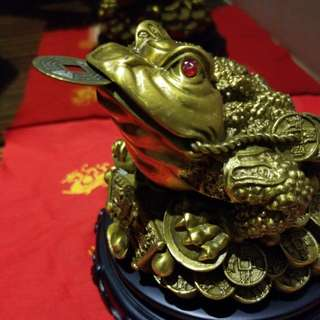 Big Money frog / feng shui golden toad