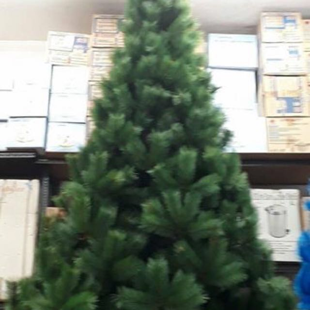 Christmas Tree Hawaiian Needle Pine 8ft Home Furniture On Carousell