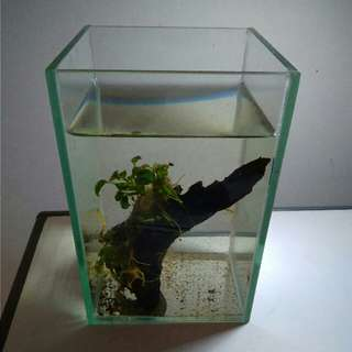 Small Aquarium Tank