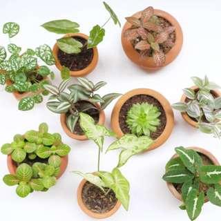 Table top Houseplants