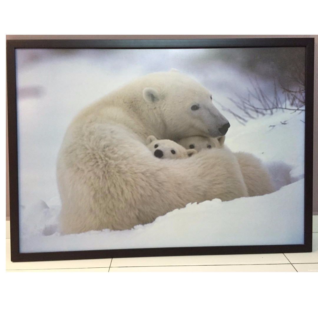 Polar Bear Poster with hi-quality wooden frame (41 X 29.5\