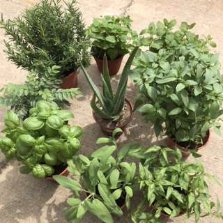 Assorted plants for sale