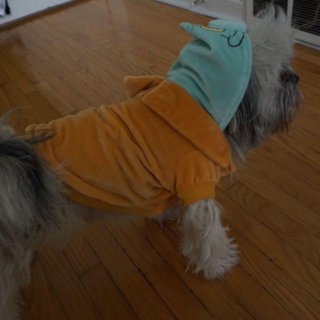 Spongebob squidward dog costume size S