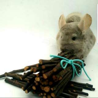 Pesticide Free home baked Apple Sticks, Chew Toy, Chew Sticks chinchilla