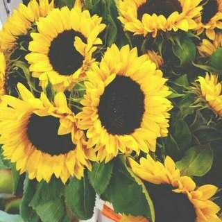 Single stalk Sunflower - 0045