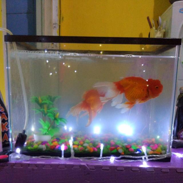 aquarium merk GEX
