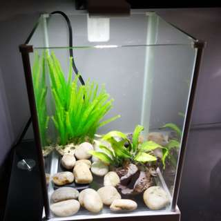 2.7G Fish Tank + Other Equipment If Wanted