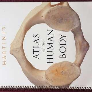 Martini Anatomy Atlas