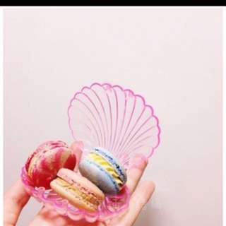 Seashell Accessory Case