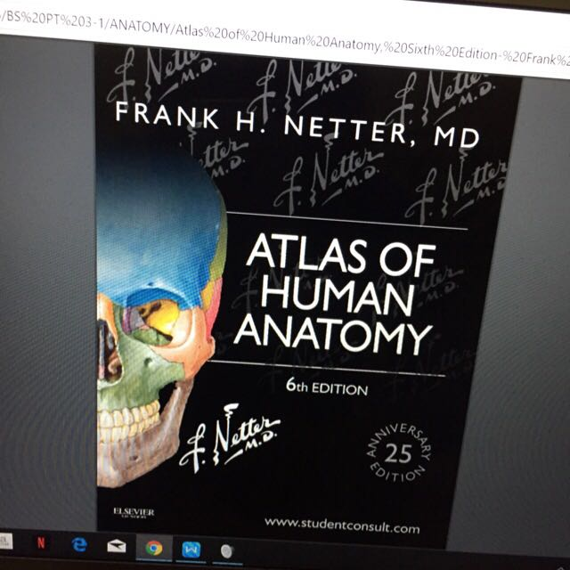 Atlas Human Anatomy Netter Image Collections Human Anatomy Organs