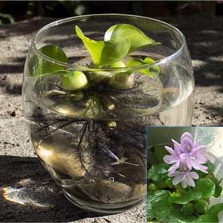 Mini water garden and mini aquarium