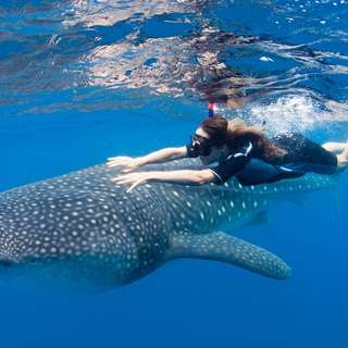 Oslob Whale Shark Snorkeling and Badian Canyoneering Adventure