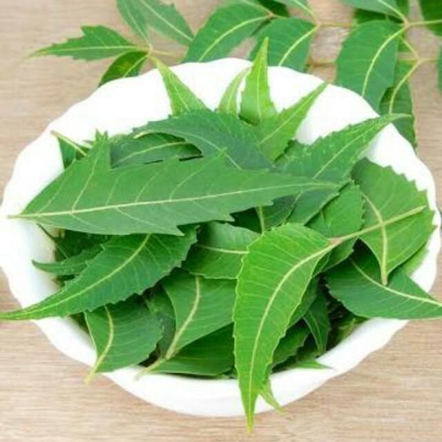 Organic Fresh Neem Leaf
