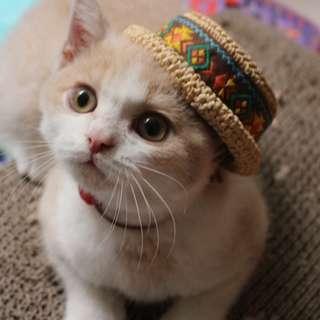 毛小孩 寵物裝飾 貓咪 寵物 草帽 布偶 太陽帽 遮陽帽 造型帽 手工編織 小草帽 變裝 柴犬 貓貓 帽帽 賣萌 必備