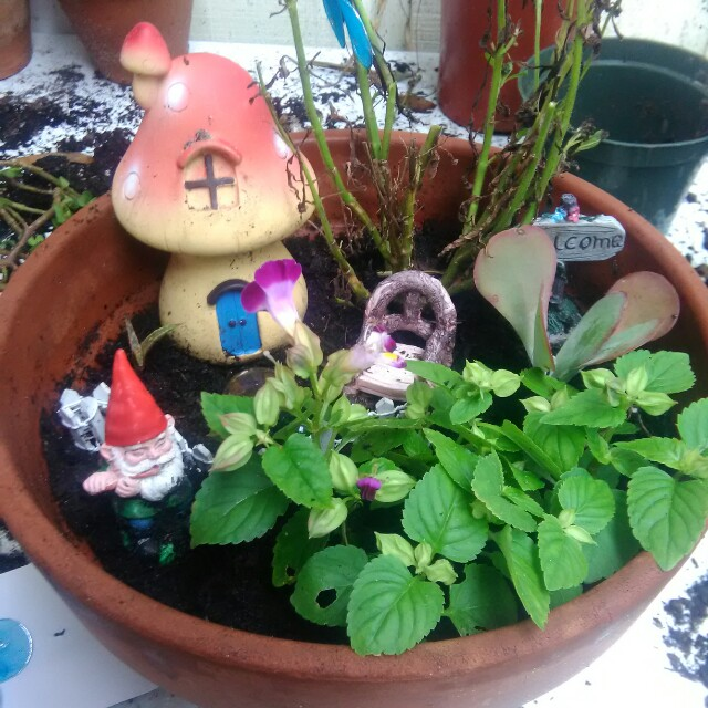 Gnome's Garden Home