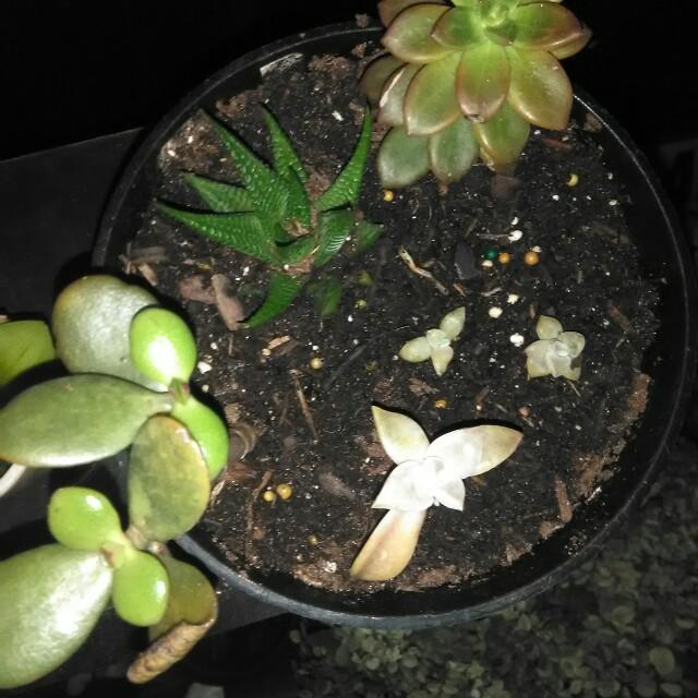 Succulent Starter Pot